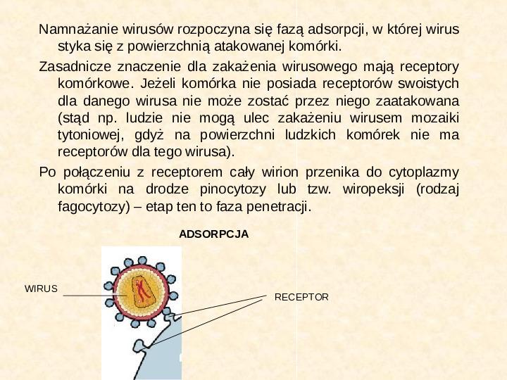 Wirusy - Slajd 10
