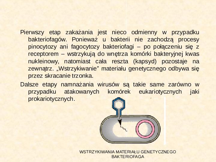 Wirusy - Slajd 11