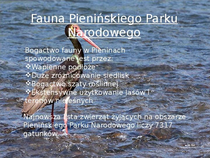 Pieniński Park Narodowy - Slajd 6