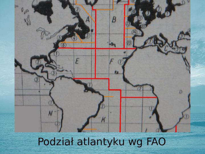 Zasoby biologiczne Atlantyku - Slajd 9