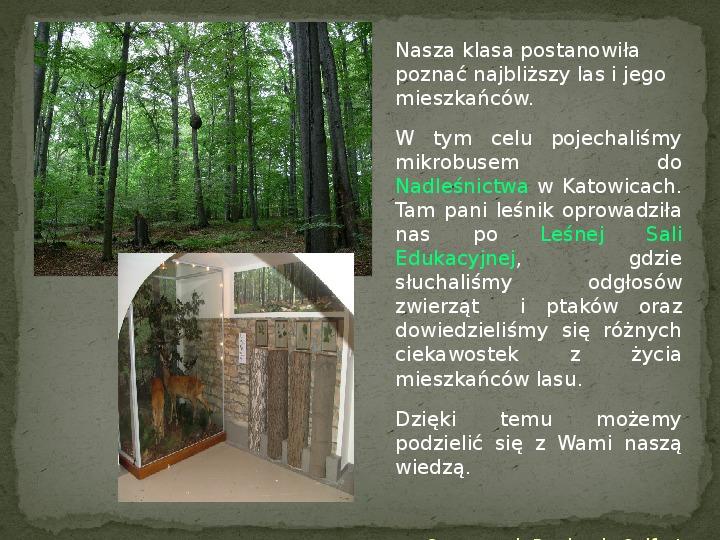 Las i jego mieszkańcy - Slajd 2