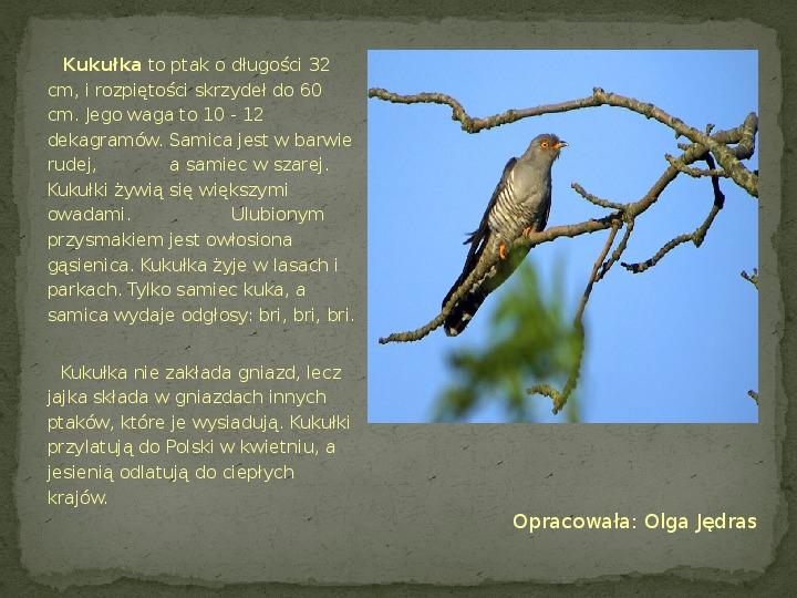 Las i jego mieszkańcy - Slajd 11