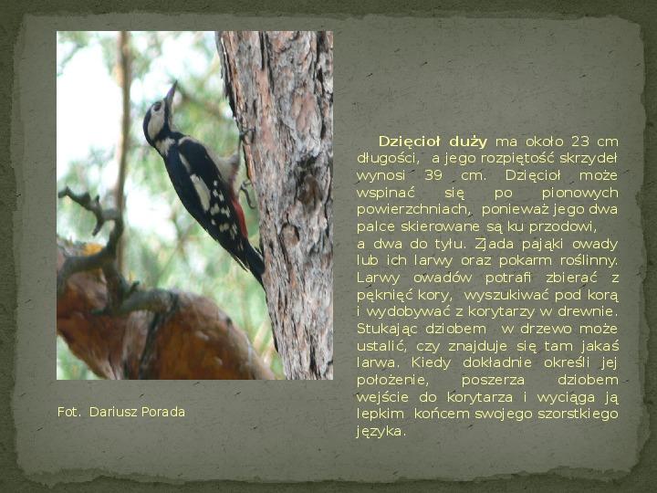 Las i jego mieszkańcy - Slajd 12