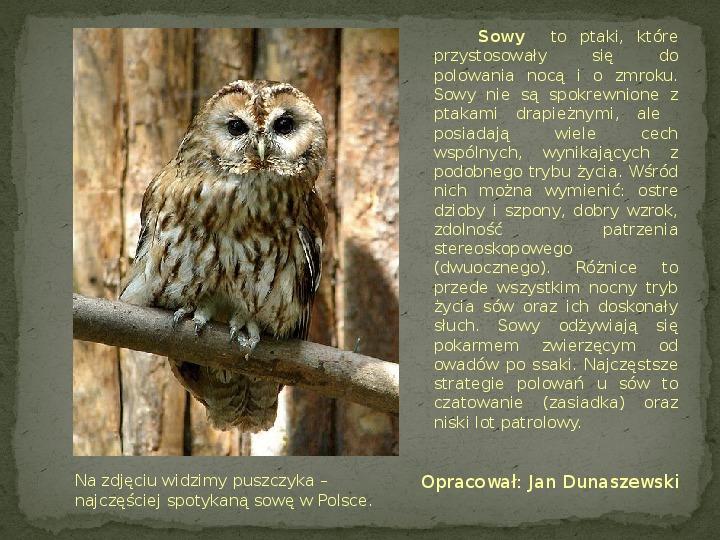 Las i jego mieszkańcy - Slajd 14