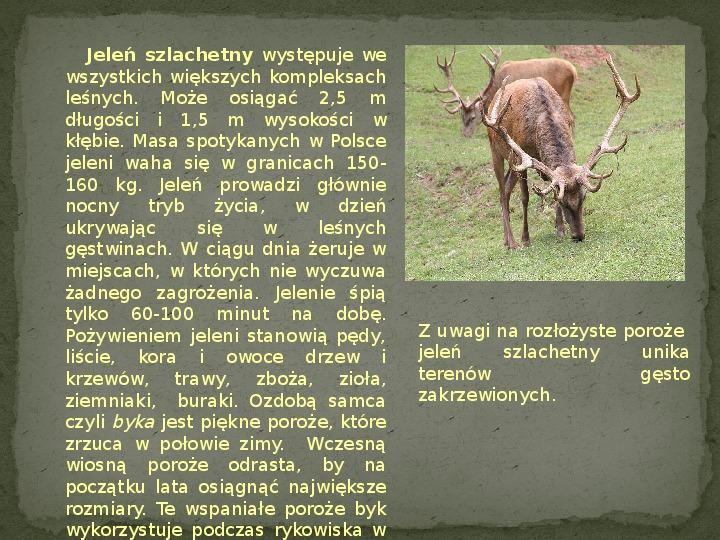 Las i jego mieszkańcy - Slajd 16