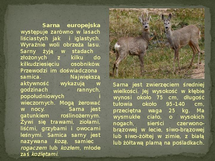 Las i jego mieszkańcy - Slajd 18