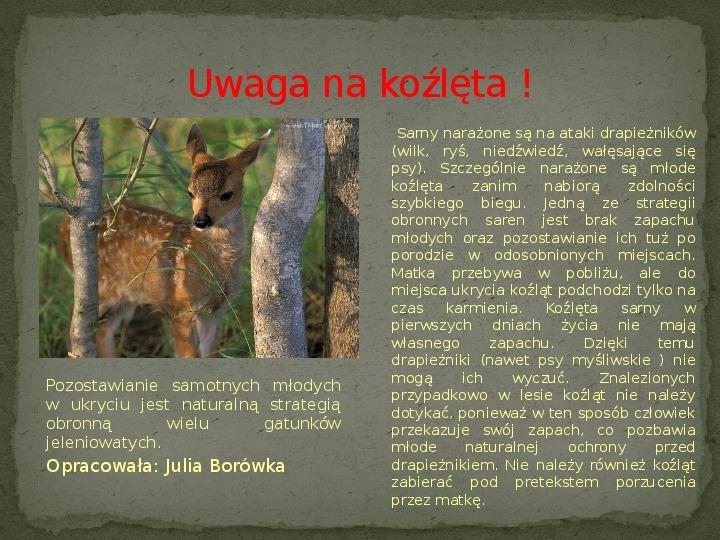 Las i jego mieszkańcy - Slajd 19