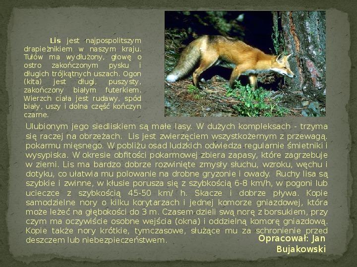 Las i jego mieszkańcy - Slajd 24