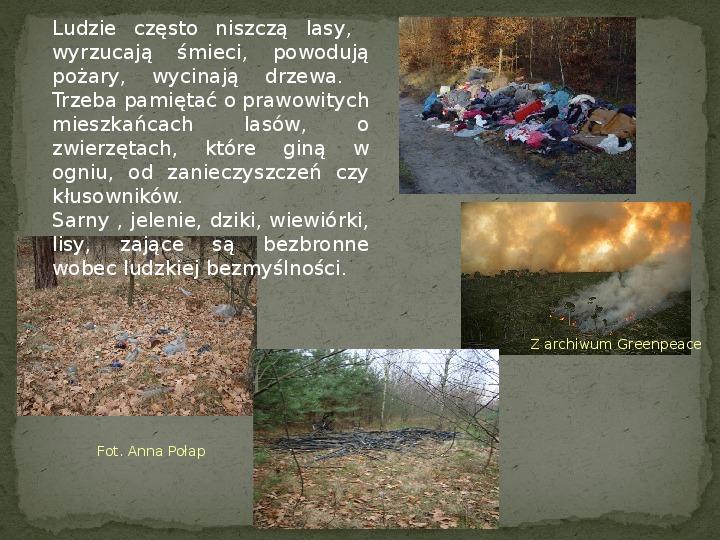 Las i jego mieszkańcy - Slajd 27