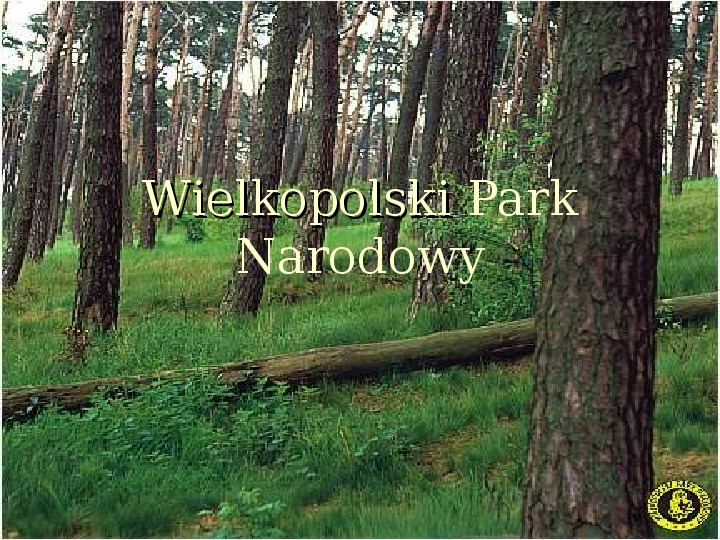 Wielkopolski Park Narodowy - Slajd 1