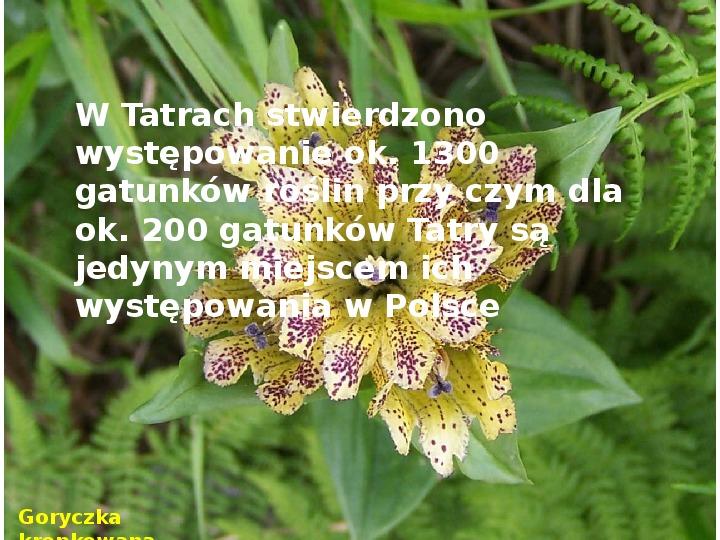 Tatry polskie - Slajd 6
