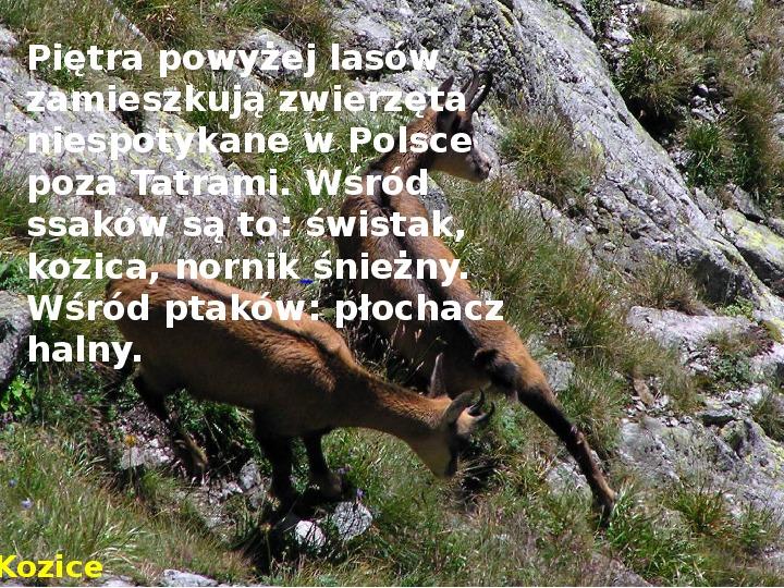 Tatry polskie - Slajd 8