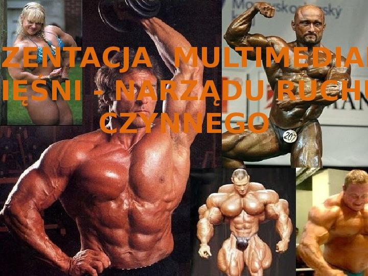 Mięśnie - narządu ruchu czynnego - Slajd 0