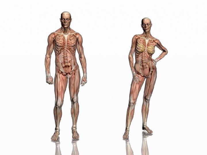 Mięśnie - narządu ruchu czynnego - Slajd 2