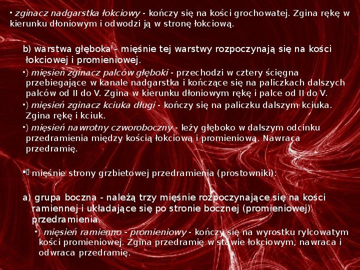 Mięśnie - narządu ruchu czynnego - Slajd 66