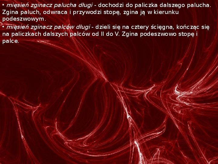 Mięśnie - narządu ruchu czynnego - Slajd 79