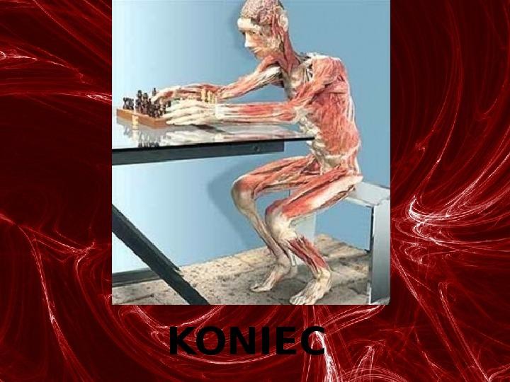Mięśnie - narządu ruchu czynnego - Slajd 90