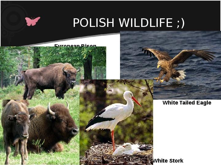 Poland - My country - Slajd 10