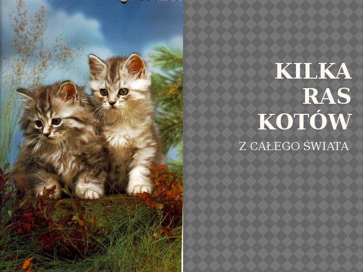 Kilka najpopularniejszych ras kotów - Slajd 1