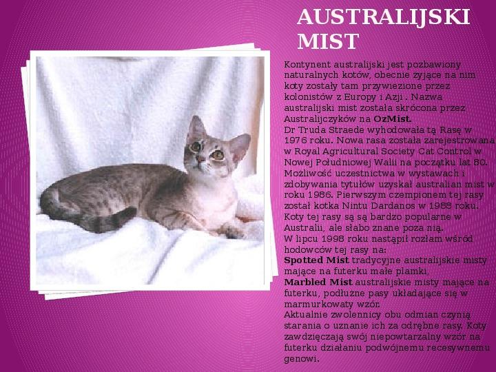 Kilka najpopularniejszych ras kotów - Slajd 2