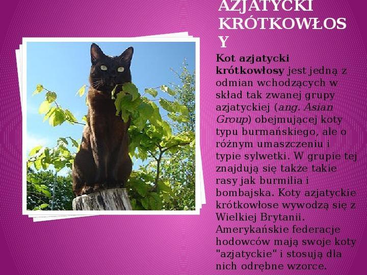 Kilka najpopularniejszych ras kotów - Slajd 3