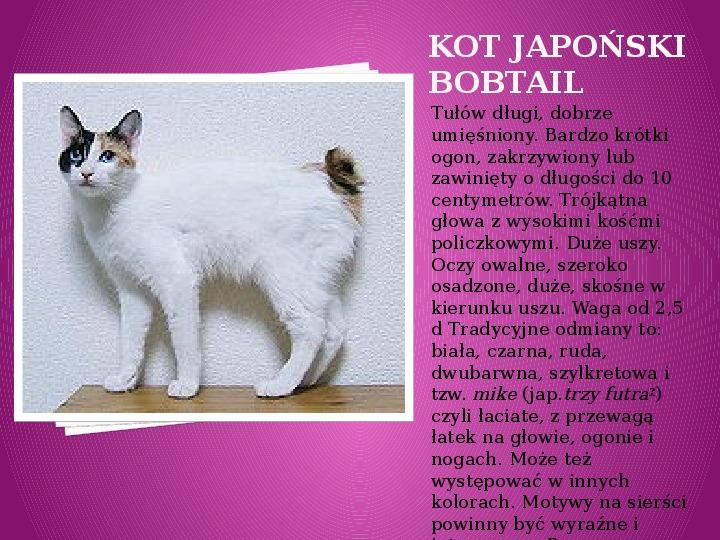 Kilka najpopularniejszych ras kotów - Slajd 14