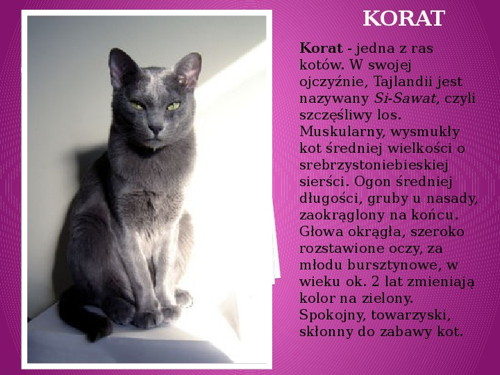 Kilka najpopularniejszych ras kotów - Slajd 17