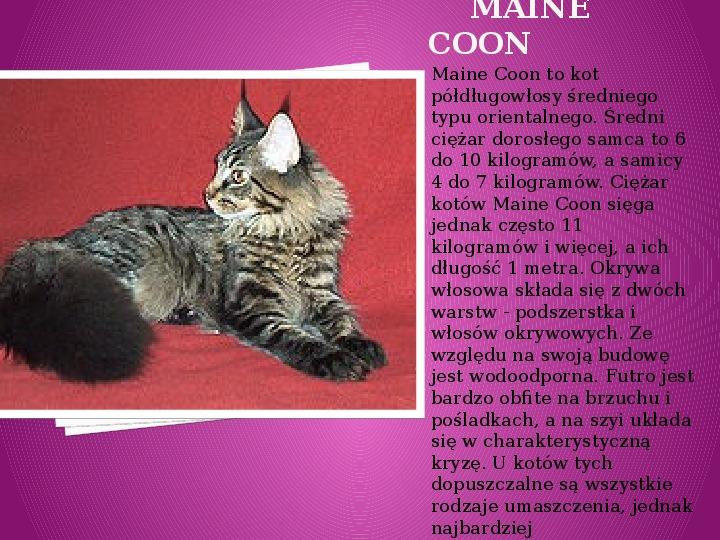 Kilka najpopularniejszych ras kotów - Slajd 19