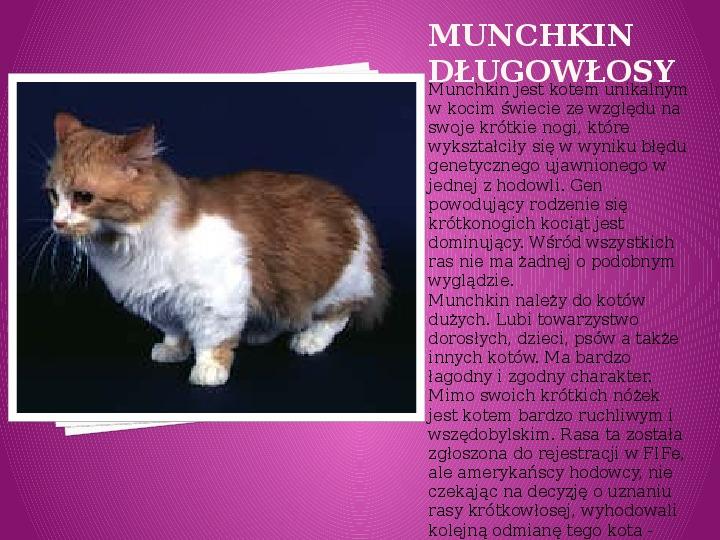 Kilka najpopularniejszych ras kotów - Slajd 21
