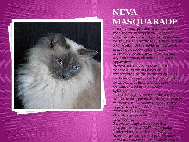 Kilka najpopularniejszych ras kotów - Slajd 23