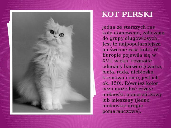 Kilka najpopularniejszych ras kotów - Slajd 27