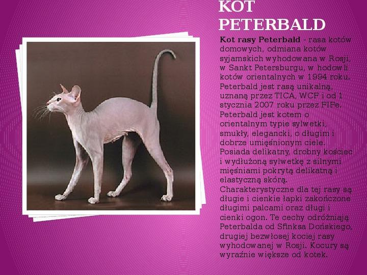 Kilka najpopularniejszych ras kotów - Slajd 28