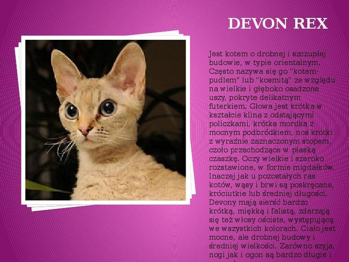Kilka najpopularniejszych ras kotów - Slajd 31