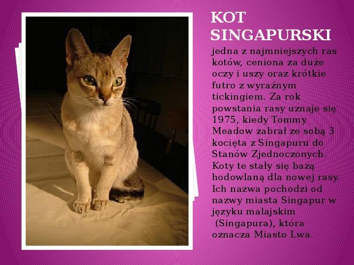 Kilka najpopularniejszych ras kotów - Slajd 38