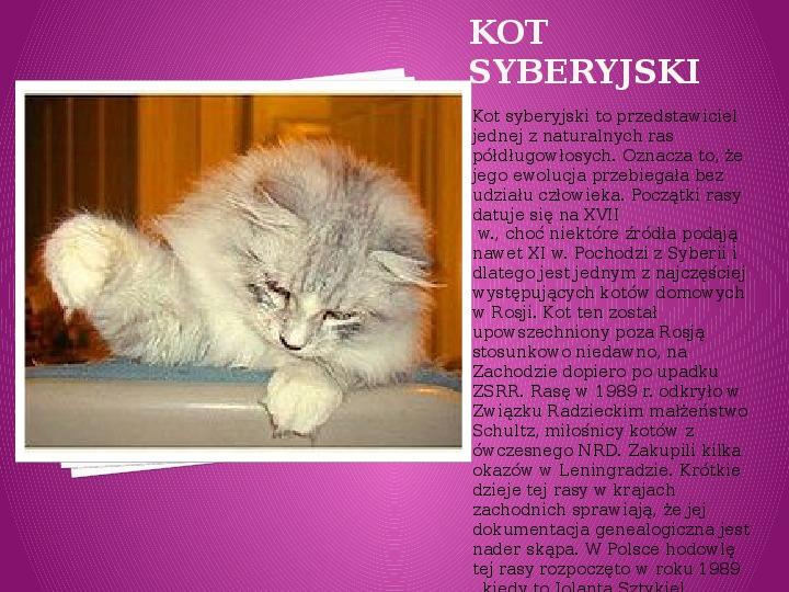 Kilka najpopularniejszych ras kotów - Slajd 39