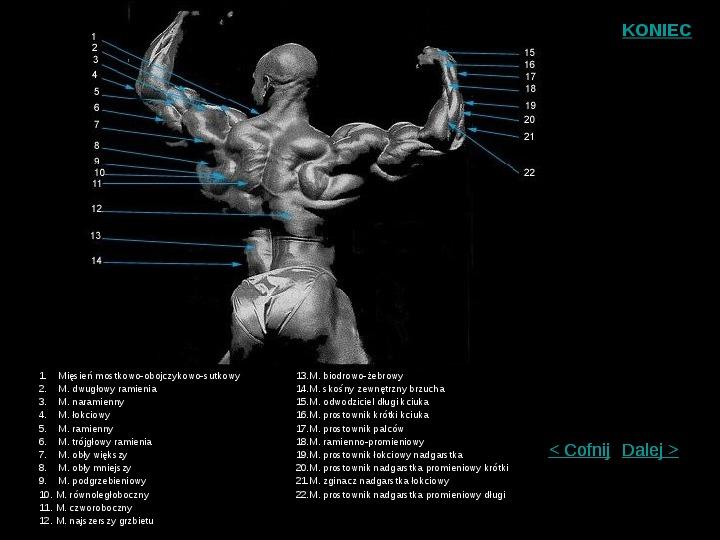 Mięśnie szkieletowe człowieka - Slajd 5