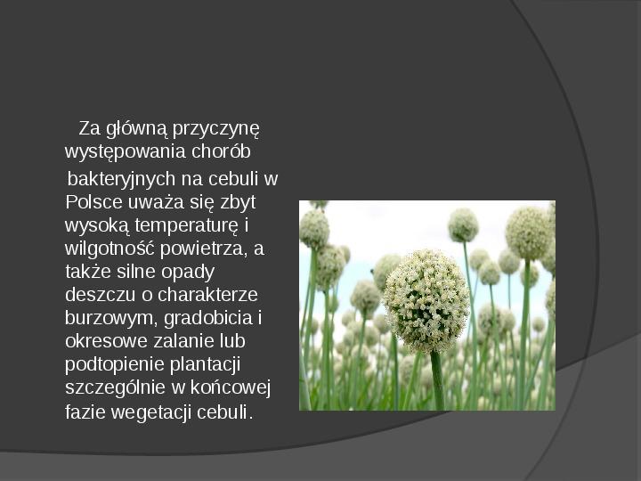 Choroby roślin warzywnych - Slajd 5