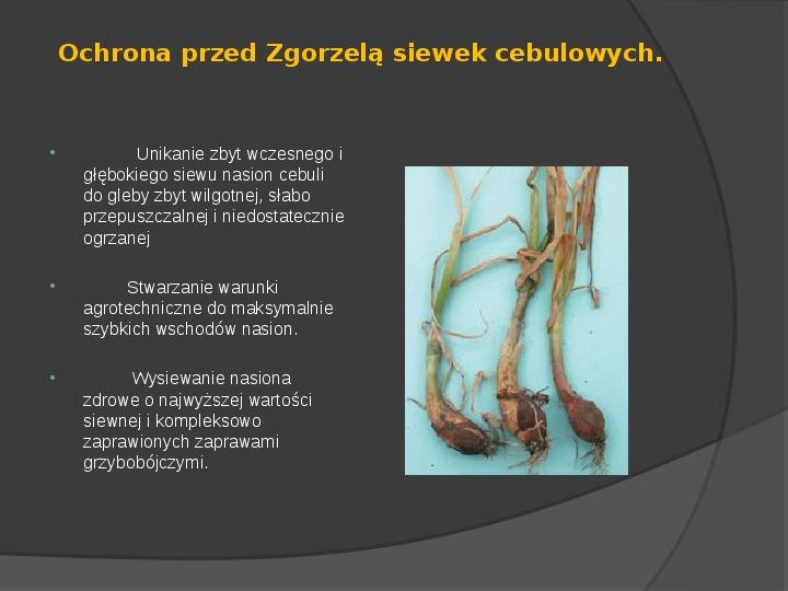 Choroby roślin warzywnych - Slajd 7