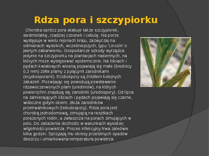 Choroby roślin warzywnych - Slajd 13