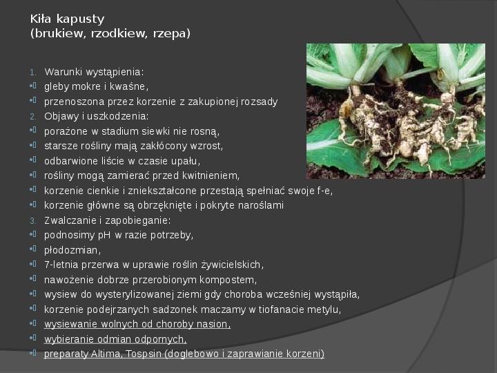Choroby roślin warzywnych - Slajd 19