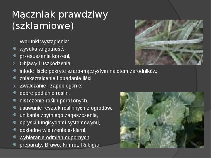 Choroby roślin warzywnych - Slajd 20