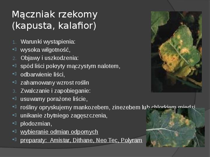 Choroby roślin warzywnych - Slajd 21