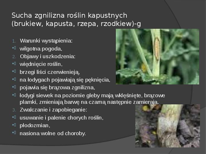 Choroby roślin warzywnych - Slajd 24