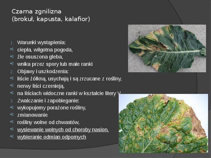 Choroby roślin warzywnych - Slajd 29