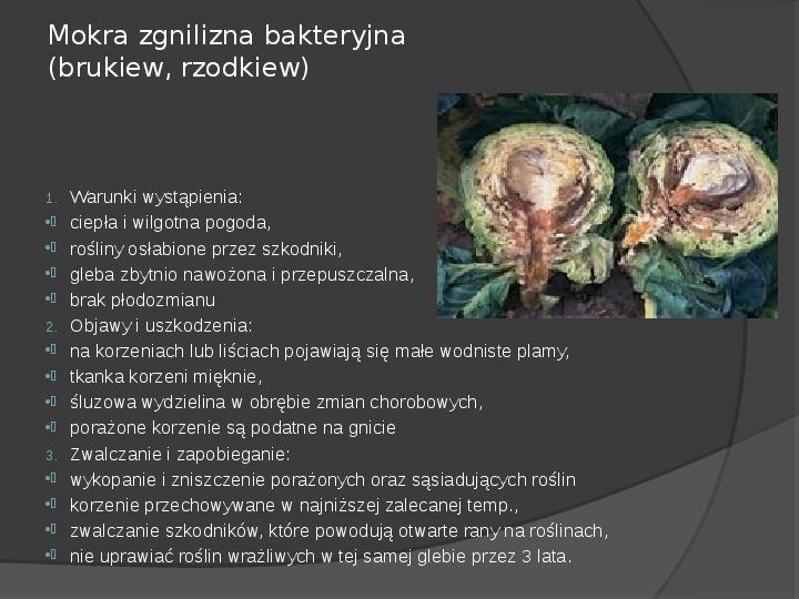 Choroby roślin warzywnych - Slajd 31