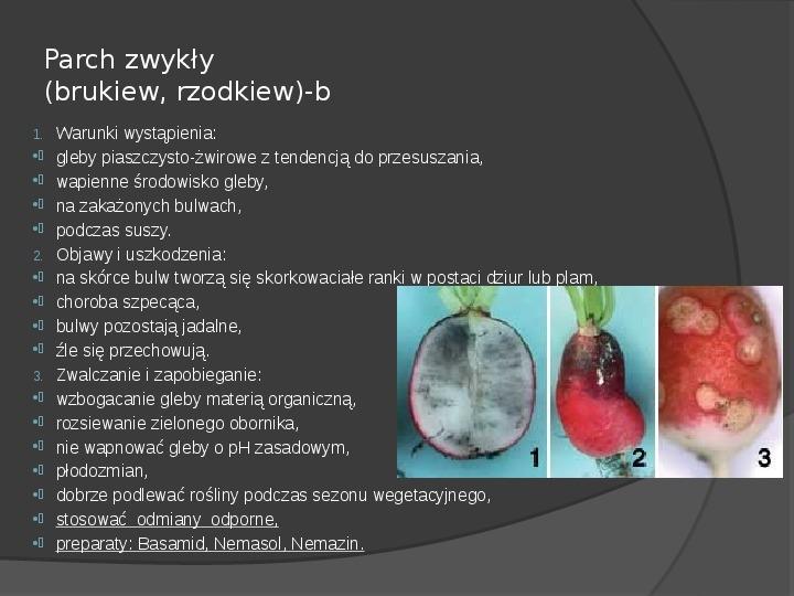 Choroby roślin warzywnych - Slajd 32