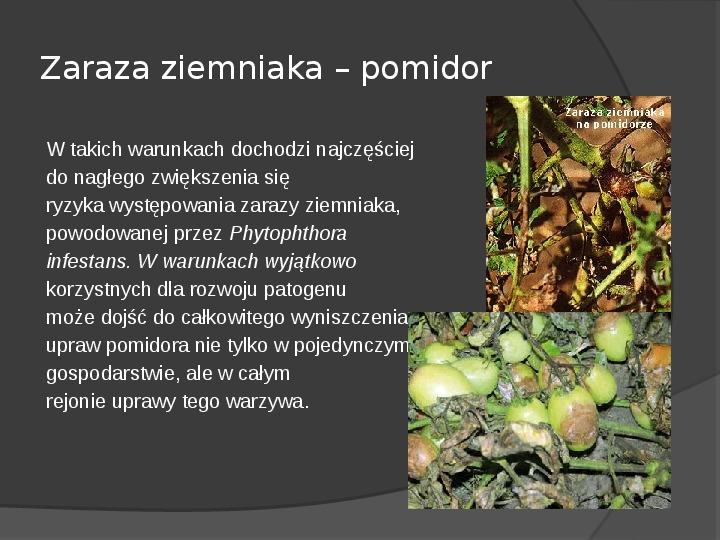 Choroby roślin warzywnych - Slajd 40