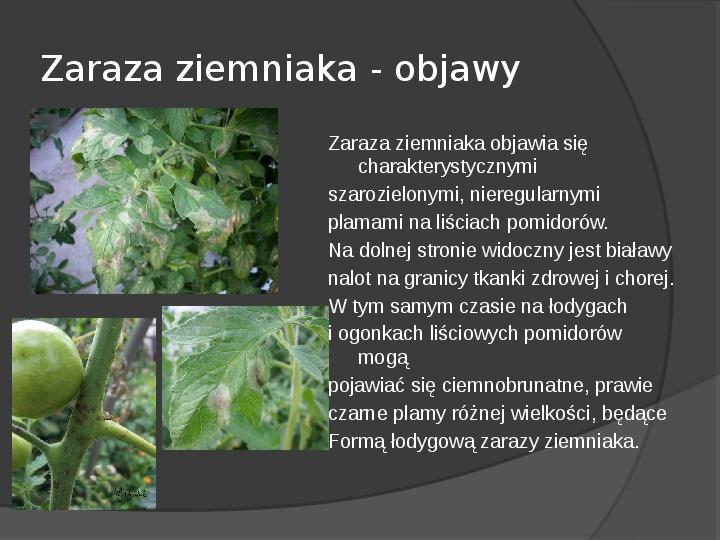 Choroby roślin warzywnych - Slajd 42
