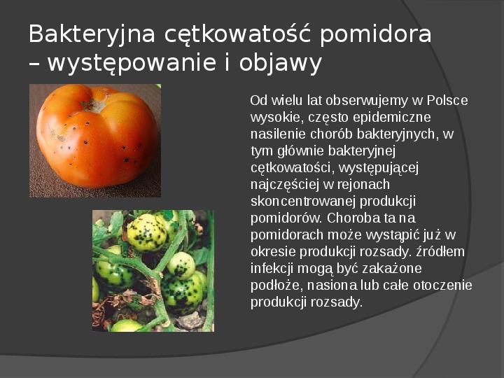 Choroby roślin warzywnych - Slajd 44