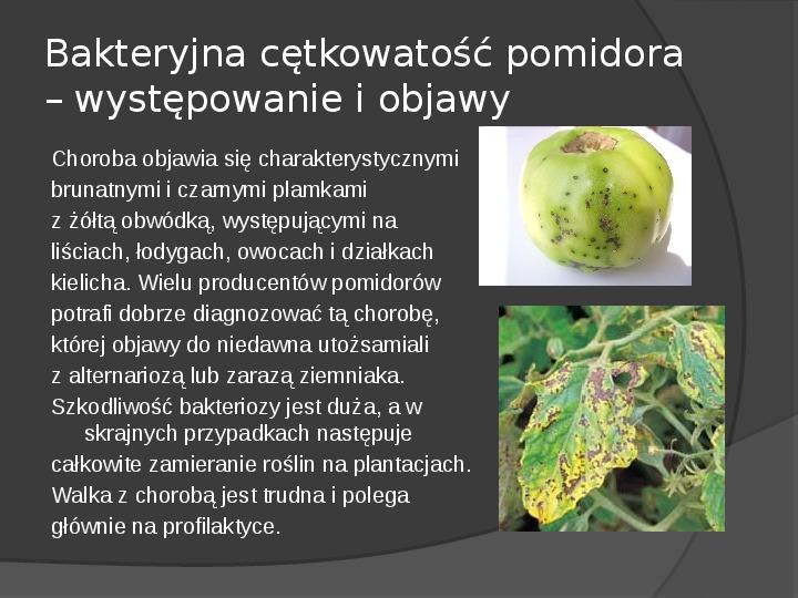 Choroby roślin warzywnych - Slajd 45